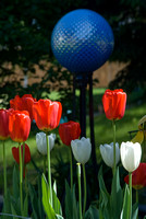 Red White & Blue: Tulips And Gazing Globe