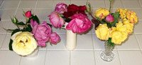 Late Roses In The Kitchen