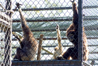 Gibbons: Hands Up, Who Likes Me?