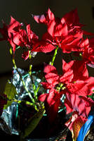Poinsettia Foiled
